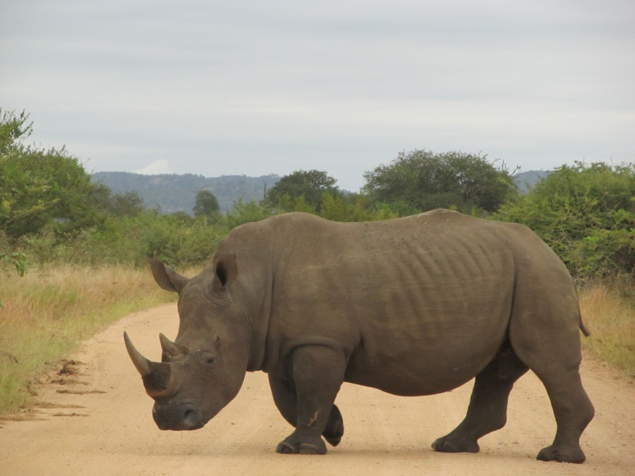 Rhino sighting during safari!